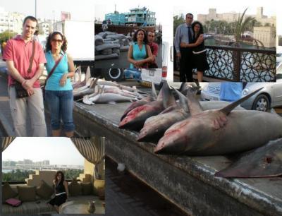 20080503145842-tiburones.jpg