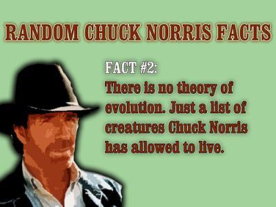 20080917105015-8de6c-chuck-norris-evolution.jpg