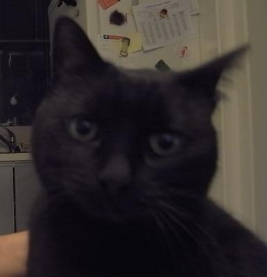 20100416123518-foto-gato.jpg